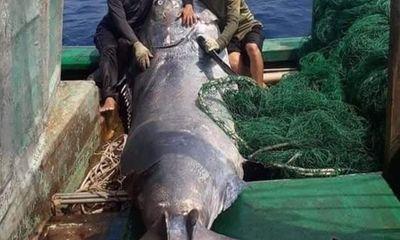 Ngư dân bắt được cá