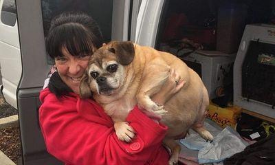 """Được dự đoán chỉ sống thêm 2 tháng, cô chó béo ú """"nỗ lực"""" giảm cân, lột xác ngoạn mục"""