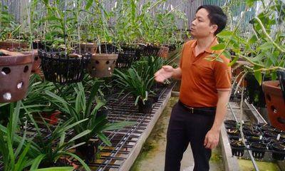 Ông chủ vườn lan 7X Mạnh Hùng và thành công từ đam mê hoa lan
