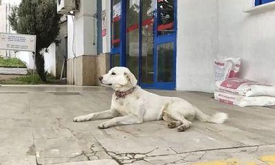 Chủ lên cơn đau tim đi cấp cứu, hành động của chú chó cưng khiến ai nấy ngỡ ngàng