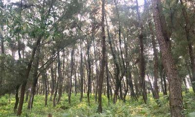 Vụ thi thể trong rừng thông với vết đâm ở cổ và bụng: Người thân tiết lộ bất ngờ