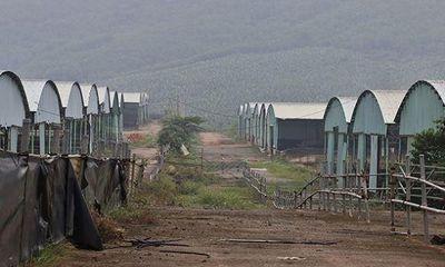 Dự án trang trại bò nghìn tỷ khiến nhiều lãnh đạo