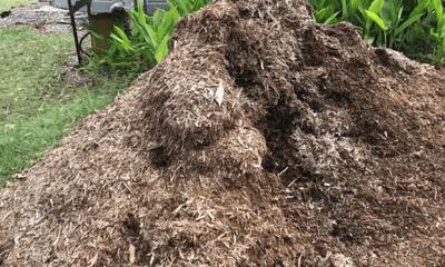 Đống cỏ khô bỗng dưng động đậy, chủ nhà lại gần kiểm tra rồi chạy vội vì thấy thứ này