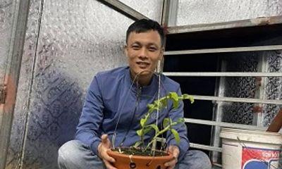 Nghệ nhân Nguyễn Thế Vinh – Chia sẻ cách phân biệt hoa lan thường và hoa lan đột biến
