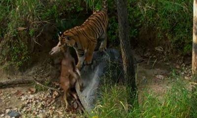 Video: Cận cảnh màn săn mồi nhanh gọn, chính xác của