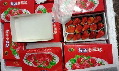 Thu giữ lô hàng dâu tây từ Trung Quốc nhập lậu vào Đà Lạt
