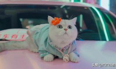 Chú mèo có nhận thù lao 50 triệu/ buổi nhờ làm mẫu xe hơi chuyên nghiệp, giúp chủ nhân một bước