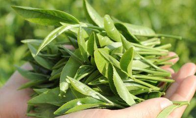 15 lý do bạn nên dùng trà xanh ngay bây giờ