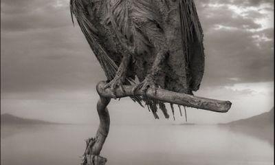 Hồ chết chóc Natron biến động vật thành những bức tượng ma quái