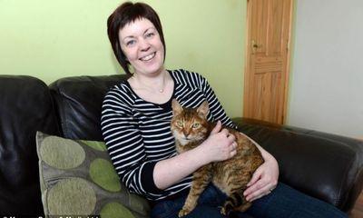Hội ngộ chú mèo sau 11 năm mất tích