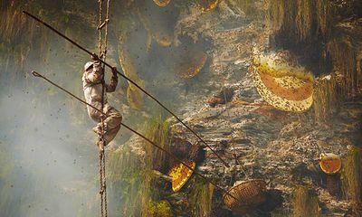 Hình ảnh liều mạng lấy mật ong rừng ở chân núi Himalaya