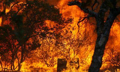 Thừa Thiên- Huế: Cháy rừng thông, thiệt hại hơn 100 triệu đồng