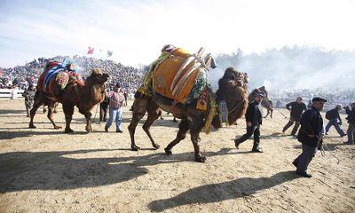 """Hàng nghìn người đổ xô đi xem lễ hội """"chọi"""" lạc đà"""