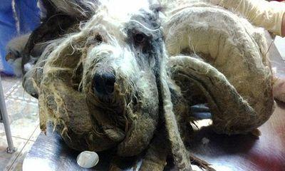 Kinh hãi bộ lông của chú chó bị chủ nhân bỏ quên một năm