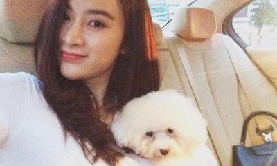 Angela Phương Trinh đưa thú cưng đi spa