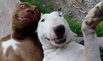 Ngắm những thước hình hài hước của các thú cưng trước camera