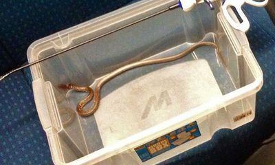 Sơ tán 450 hành khách vì phát hiện một con rắn trên tàu