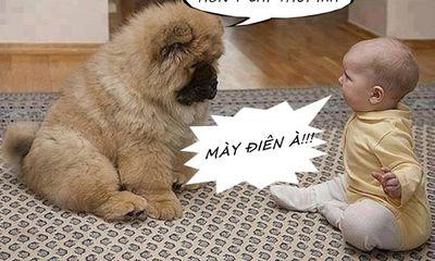 Những bức hình hài hước khiến bạn cười