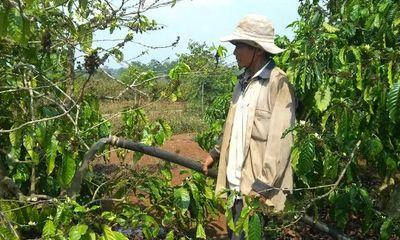 Đắk Lắk: Khô hạn kéo dài, hàng nghìn diện tích cây trồng