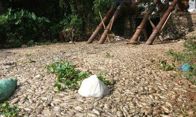 Hà Nam: Cá chết bất thường, nổi trắng sông Nhuệ