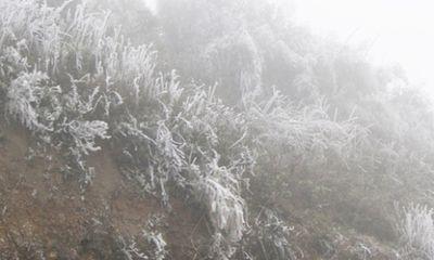 Đêm nay, dự báo sương muối sẽ bao trùm Sa Pa