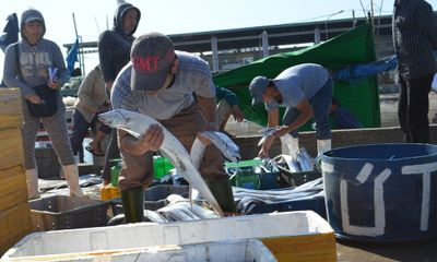 Nhiều tàu cá Trung Quốc đánh bắt trái phép ở vùng biển Việt Nam