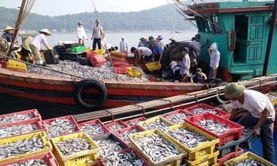 """Ngư dân miền Trung được mùa """"lộc biển"""" đầu năm mới"""