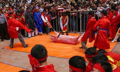 Vẫn tổ chức lễ hội chém lợn, Tổ chức Động vật châu Á nói gì?