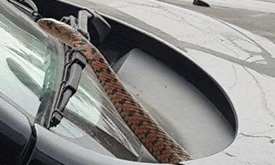 Đang lái xe bỗng nhiên phát hiện con rắn dài 1m ngoi lên trước mặt