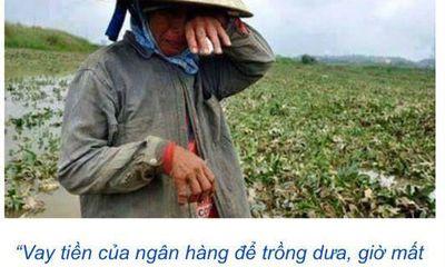 Cộng đồng kêu gọi mua dưa hấu giúp nông dân Quảng Nam ngập lụt