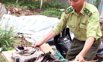 Lâm Đồng: Liên tiếp phát hiện voọc chà vá chân đen bị giết hại