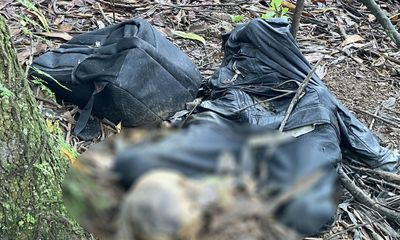 Vụ thi thể nam giới đang phân hủy trong rừng tràm: Hiện trường có gì?