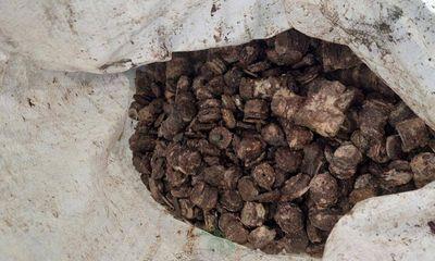 Đi lặn bắt ốc, ngư dân Quảng Bình phát hiện gần 800 kg tiền xu