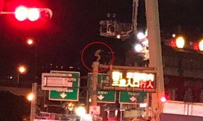 Cô gái cheo leo trên cột đèn cao 8m, hành động bất ngờ sau đó làm ai nấy sợ thót tim
