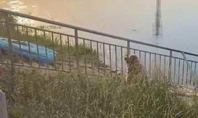 Chủ nhân trượt chân ngã chết đuối, hành động của hai chú chó cưng khiến ai nấy xót xa