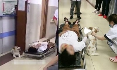 Cô chủ gặp tai nạn, chú chó cưng cố chấp làm một việc khiến ai nấy rơi lệ