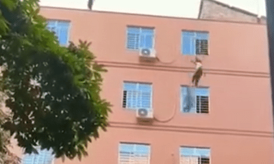Thót tim cảnh giải cứu bé gái 15 tuổi nhảy lầu tự tử, sự tình phía sau khiến dân mạng phẫn nộ