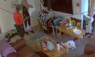 Đặt camera giám sát căn hộ lúc đi vắng, cô gái rợn người phát hiện hành động biến thái của chủ nhà