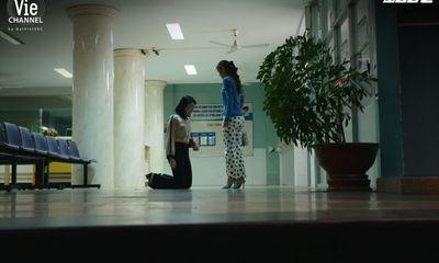 Cây Táo Nở Hoa tập 58: Châu quỳ gối cầu xin, Báu vẫn nhẫn tâm từ chối hiến gan cứu anh hai