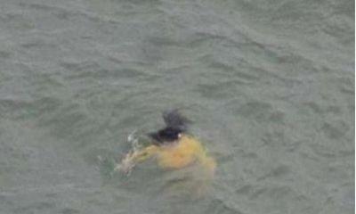 Vội vàng lao xuống sông cứu cô gái đuối nước, ông lão đột nhiên bỏ mặc nạn nhân vì lý do bất ngờ