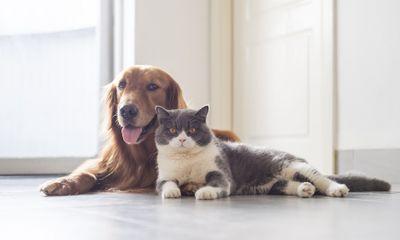Chó, mèo có lây COVID-19 sang cho người không?