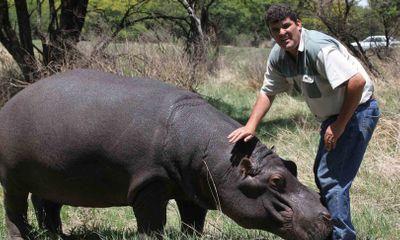 Cưng hà mã như con đẻ, người đàn ông Nam Phi nhận cái kết bi thảm