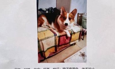 Cô gái trần tình về tờ thông báo sẽ hậu tạ cả căn nhà cho người tìm được thú cưng