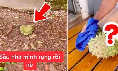 Cô gái trồng cây sầu riêng 5 năm mới ra quả, khui trái đầu đã ngỡ ngàng khi nhìn thấy phần ruột bên trong
