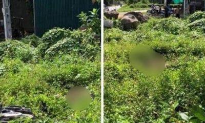 Vụ nam thanh niên 18 tuổi tử vong ở bụi cỏ ven đường: Hiện trường xuất hiện chiếc xe máy bí ẩn
