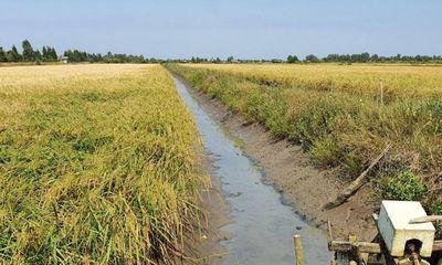 Vụ thi thể bé gái 5 tuổi ở ruộng lúa: Nghi vấn bị bác họ xâm hại, dìm chết