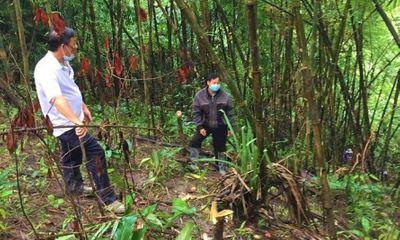 Đi hái măng rừng, bàng hoàng phát hiện thi thể đang phân huỷ