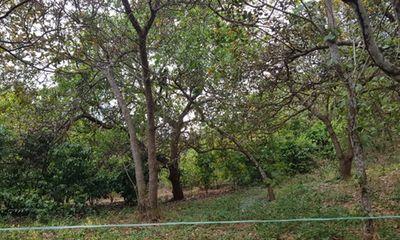 Vụ đi chăn bò, kinh hãi phát hiện thi thể treo trên cây trong rừng tràm: Nạn nhân không mặc áo