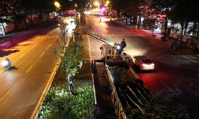 Hà Nội đánh chuyển hơn 200 cây phong lá đỏ do không hợp khí hậu