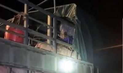 Quảng Ninh: Phát hiện gần 20 người trốn trên 5 xe chở lợn để tránh chốt kiểm dịch